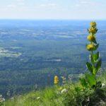 Préparer vos vacances en Auvergne